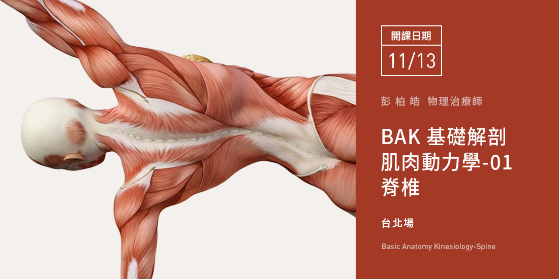 基礎解剖肌肉動力學--四部曲--Level.01--脊椎